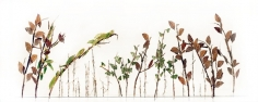 Maria Fernanda Cardoso, Garden of insect, Ed. 2/3, 2010.  Archival print on 350g cotton rag, 8 11/16 x 21 11/16 in.