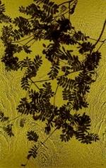 Rowan Brook, 2012, 30 x 19 inch digital c-print-Edition of 9