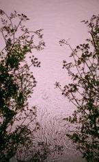 Hemlock, 2013, 30 x 19 inch digital c-print-Edition of 9