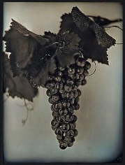 Chuck Close, Red Wine Grapes 2, 2007, 30 x 23 in.