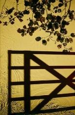 """Entrance, 2012, 60"""" x 39"""""""