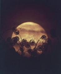 "Susan Derges. Full Moon - Dandelion.  2004.  24"" x 20"""