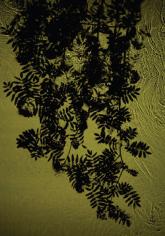 Rowan Brook, 2012, 48 x 33.25 inch digital c-print-Edition of 5