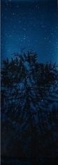 Star Field Cypress, 2003, 66 x 24 inch Unique Cibachrome