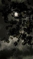 Waxing Moon, 2013, 30 x 17 inch digital c-print-Edition of 9