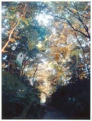 REI SATO Tree, 2008