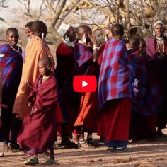 Banovich & Homann's Africa