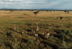 Wildscapes Travel-Seeking a better understanding of the world around us through ART   TRAVEL   FILM   PHILANTHROPY
