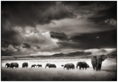 Nick Brandt, Elephant Herd, Serengeti, 2001