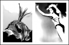 Lillian Bassman, Flower 32 (Wilted Tiger Lily), 2006