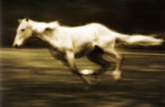 Michael Eastman, Horse # 36, 2000