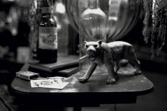 Mary McCartney, Smoking Tiger, 2003