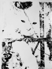 Kali, Kali Cat Abstract, Palm Springs, CA, 1967