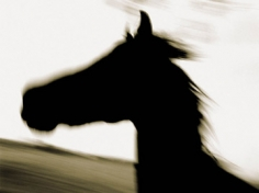 Michael Eastman, Horse # 196, 2001