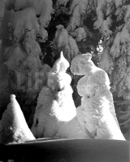 Alfred Eisenstaedt,  Evergreen trees at 51 degrees fahrenheit, Mt. Tremblant, Canada, 1944