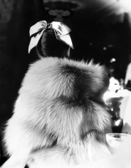Lillian Bassman, The Little Furs: Mary Jane Russell by cape-jacket by Ritter Brothers, The Essex House, New York. Harper's Bazaar, 1955