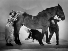 "Ted Allan, The Marx Brothers (Harpo, Groucho, Chico) with a Horse for ""A Day at the Races,"" 1936"