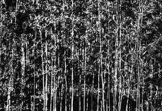 Erica Lennard, Bamboo, East Hampton, 2000