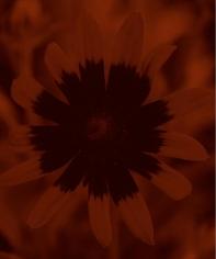 Isabella Ginanneschi, Mystic Flower, 2010