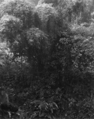 Isabella Ginanneschi, Bamboo Jungle, 1998