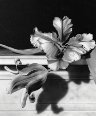 Horst P. Horst, Lady Slipper, Oyster Bay, New York, 1990