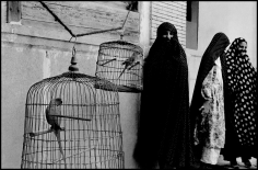 Inge Morath, Veiled Muslim women and caged cockatoos, Shiraz, Iran,