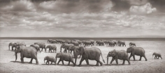 Nick Brandt, Elephant Herds Crossing Lake Bed in Sun, Amboseli, 2007