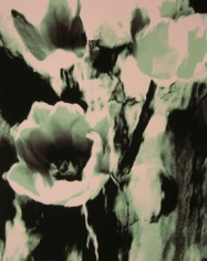 Lillian Bassman, Flower 3 (Green Tulips), 2006