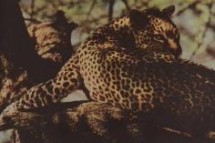 Sheila Metzner, Cheetah. Kenya. 1997.