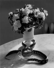 André Kertész Still Life with Flowers and Snake, New York, 1960
