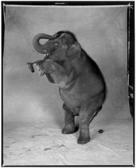 Patrick Demarchelier Elephant, New York, 199