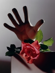 Horst, Rose with Cast Of Michelangelo Hand, c. 1985