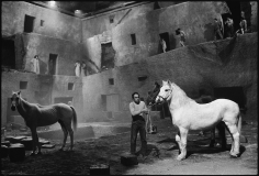 Mary Ellen Mark, Readying the horses for the next take, Fellini's Satyricon,  Rome, Italy, 1969