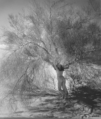 Andre De Dienes, Nude with tree, 1960's
