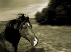 Michael Eastman, Horse # 126, 2001