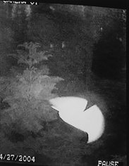 Kali, Morphing UFO, April 27, 2004