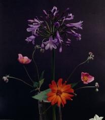Horst, Agapanthus, Anemonoe Japonica, Zinnia, c. 1985