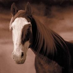 Michael Eastman, Horse # 18, 1999