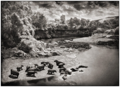 Nick Brandt, Hippos on the Mara River, Maasai Mara, 2002