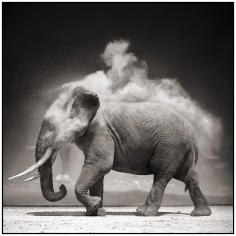 Nick Brandt, Elephant with Exploding Dust, Amboseli, 2004