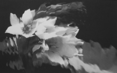 Lillian Bassman, Flower 17, 2006