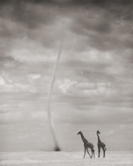 Nick Brandt, Giraffes and Dust Devil,  Amboseli, 2007
