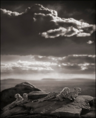 Nick Brandt, Cheetah and Cubs Lying on Rock,  Serengeti, 2007