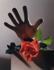 Horst P. Horst, Rose with Cast of Michelangelo Hand