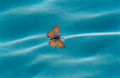 Mary McCartney,  Butterfly in Pool, 2003
