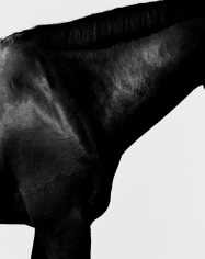 Steven Klein, Horse Neck I, 1995