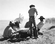 Kurt Markus, Cataract Land and Livestock Co.,  Williams, Arizona, 1981