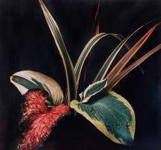 Horst, Caladium and Hosta Leaves, c. 1985