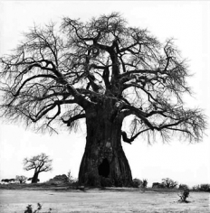 Patrick Demarchelier Tree, Tanzania, 1993