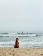 Michael Dweck, Surf Dog, Montauk, 2002